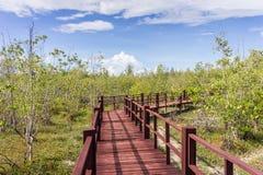 Overstroomde bomen in provincie van mangrove de bosphetchaburi thailand Royalty-vrije Stock Afbeelding