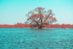 Overstroomde boom Stock Afbeeldingen