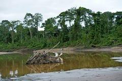 Overstroomde gebieden aan de rivierkant Royalty-vrije Stock Foto's