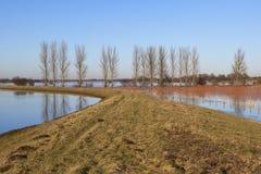 Overstroomde gebieden met populierbomen Stock Foto