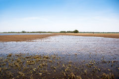 Overstroomde landbouwgrond Royalty-vrije Stock Fotografie