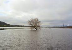 Overstroomde rivierbank Royalty-vrije Stock Afbeeldingen