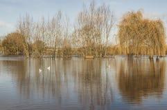 Overstroomde rivierbank bij Ross-op-Y Stock Afbeeldingen