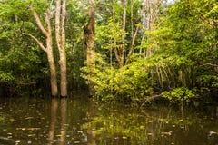 Overstroomde wildernis bij de rivier van Amazonië stock fotografie