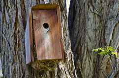 Overstuffed and Overflowing Birdhouse Stock Photos