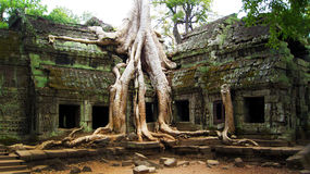 Ta Prohm Temple Siem Reap Cambodia- Ancient Angkor. Tree has completely consumed the ancient temple of Ta Prohm in the ancient town of Angkor Cambodia Royalty Free Stock Photo