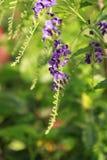 Overtreed kleurenbloem in een tuin Stock Fotografie