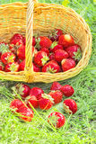 Overturned basket of strawberries in the summer green grass Stock Photography