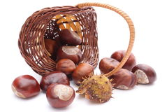 Overturned wicker basket with chestnuts on white background Stock Image