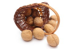 Overturned wicker basket with wanuts on white background Royalty Free Stock Images