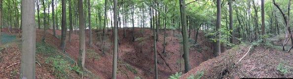 Overvieuw de forêt images libres de droits