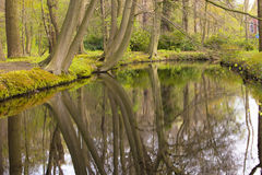 Overview of a Canal through a Forest with Beech Trees Fagus sylvatica at the Waterfront in Country Estate Oosterbeek, Wassenaar, Royalty Free Stock Photography