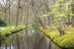 Overview of a Canal through a Forest with Beech Trees Fagus sylvatica at the Waterfront in Country Estate Oosterbeek, Wassenaar, Royalty Free Stock Images
