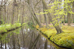 Overview of a Canal through a Forest with Beech Trees Fagus sylvatica at the Waterfront in Country Estate Oosterbeek, Wassenaar, Royalty Free Stock Photo