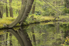 Overview of a Canal through a Forest with Beech Trees Fagus sylvatica at the Waterfront in Country Estate Oosterbeek, Wassenaar, Stock Photos