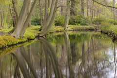Overview of a Canal through a Forest with Beech Trees Fagus sylvatica at the Waterfront in Country Estate Oosterbeek, Wassenaar, Stock Images