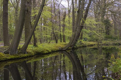 Overview of a Canal in a Forest in Country Estate Oosterbeek, Wassenaar, The Netherlands Stock Image