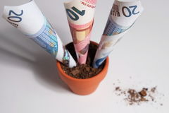 Overview of Euro banknotes growing out of pot Stock Images