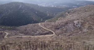 Overview of forest devastated afte fire stock video footage