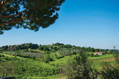 Overview of olive trees and hills with villa at the top in the Tuscan countryside. Royalty Free Stock Images