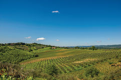 Overview of olive trees and hills with villa at the top in the Tuscan countryside. Stock Photography
