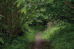 Overview of pathway in the middle of the closed woods, near the town of Frascati. Stock Images