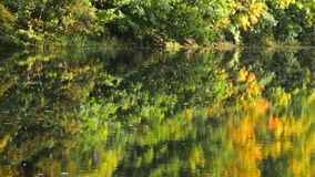 Reflection in water. Overview of the reflection in the water of the autumn nature. A lake among the trees in the park stock video