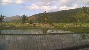 Overview of rice paddies in Bali. stock images