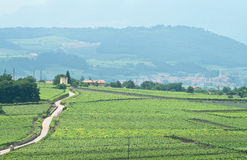 Overview of a road through italian vineyards royalty free stock images