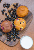 Overview of three muffins with blackcurrant and a glass of milk. A view from above onto a tasty composition of lemon and chocolate muffins with a glass of milk Royalty Free Stock Image