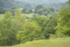 Overview of Trees in a Hill Country in Belgium Royalty Free Stock Images