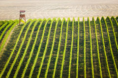 Overview of vineyard in Palava, Royalty Free Stock Image