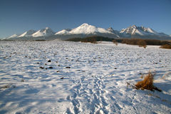 Overview of the winter High Tatras. Overview with tussock of the winter High Tatras - Slovakia stock photo