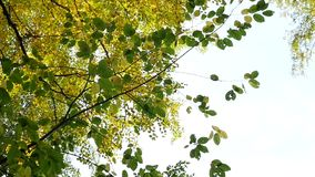 Overview of yellowing autumn trees stock video footage