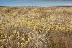 Overvloed bloemen in het cerradobioma Serra da Canastra Nat Royalty-vrije Stock Fotografie