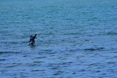 Overvloed meer vissen in het overzees Stock Fotografie