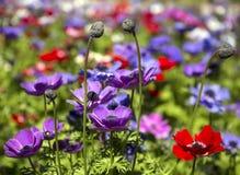 Overvloed van bloeiende wilde bloemen op de weide in de lentetijd Stock Foto