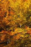 Overvloed van kleurrijk dalingsgebladerte royalty-vrije stock foto