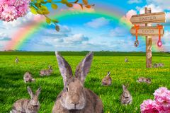 Overvloed van konijnen op groene weide met regenboog op de achtergrond stock fotografie