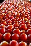 Overvloed van tomaten Stock Afbeeldingen