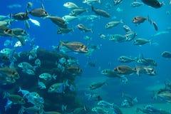 Overvloed van vissen stock fotografie