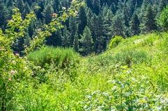 Overvloedig vers groen weidehoogtepunt van bloemen en installaties Stock Fotografie