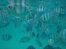 Overvol met een kudde van Overzeese Vissen Royalty-vrije Stock Afbeeldingen