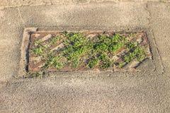 Overvolle oude roestige stedelijke reproductie met het kweken van gras royalty-vrije stock foto's