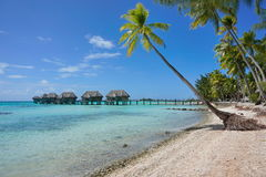 Overwater bungalowlagun och kokospalmer royaltyfri fotografi