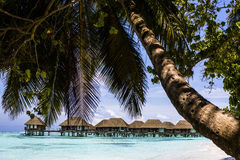 Overwater Villas with palm trees and a beach in the Maldives Royalty Free Stock Photography