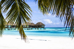 Overwater Villas with palm trees in the Maldives Stock Images