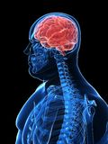Overweight male - brain Royalty Free Stock Photos
