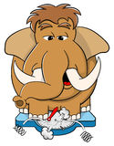 Overweight mammoth standing on scales. Vector illustration of a overweight mammoth standing on scales Stock Image