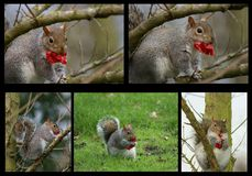 Overweight squirrel and cake Stock Images